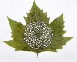 Lorenzo-Duran-leaf-art-181
