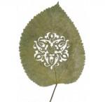 Lorenzo-Duran-leaf-art-44
